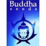 Conoce las Semillas de Buddha Seeds