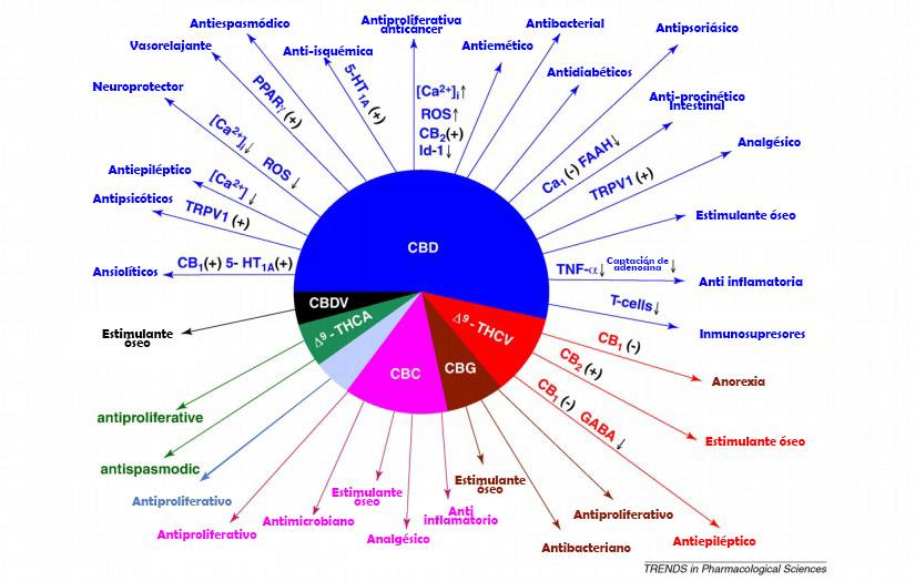 Marihuana para uso medicinal (2)