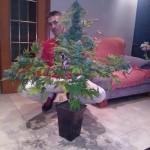 Trucos para tener más producción de marihuana