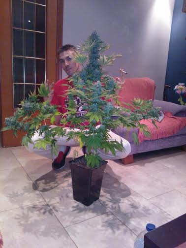 trucos para tener m s producci n de marihuana
