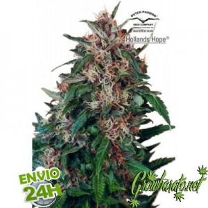 semillas de marihuana para exterior