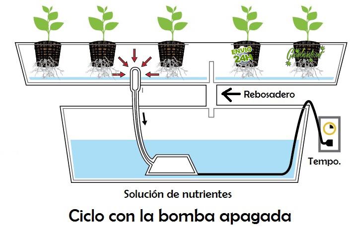 formas de cultivar marihuana en hydro