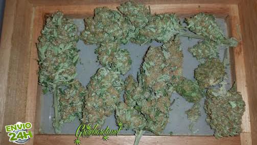 Las diversas formas de consumir Cannabis