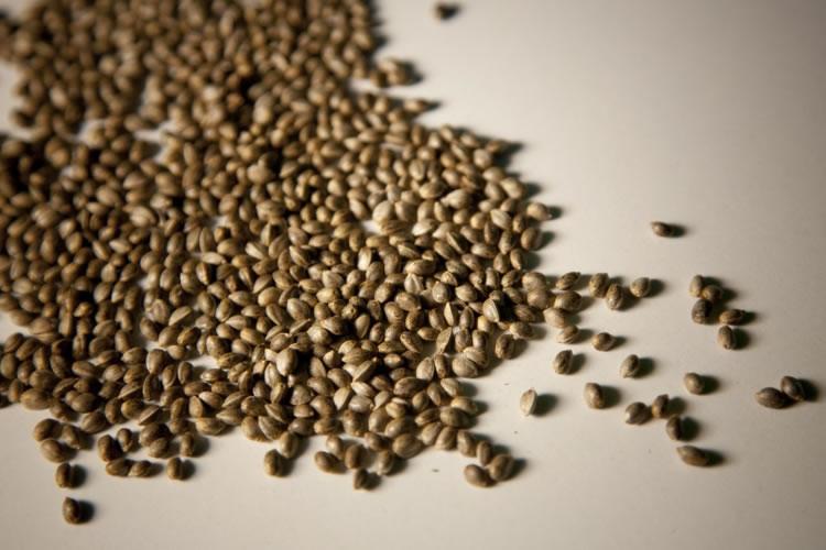 semillas-cannabis