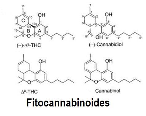 cannabinoides naturales
