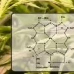 Efectos de la radiación lumínica sobre las plantas