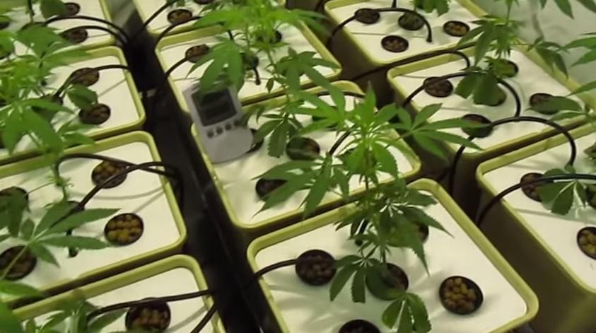 Diferencias entre cultivo hidroponico y cultivo en tierra
