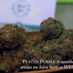 Cuando se legalizará el cannabis