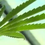 Huele a legalizacion