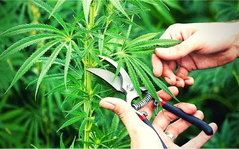 www.growbarato.net