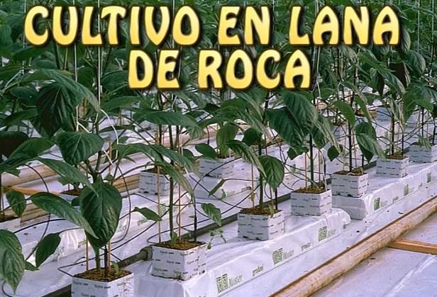 Cultivar en lana de roca blog de grow barato for Lana de roca ignifuga