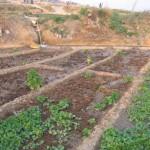 Materiales tóxicos para las plantas