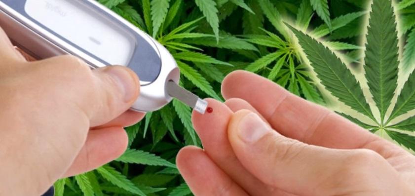 El cannabis y la diabetes - Blog de Grow Barato