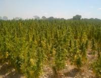 Salud marihuana y sociedad