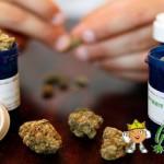 Los cannabinoides podría inhibir el crecimiento de células cancerosas