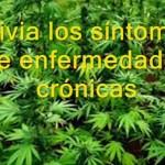 Cannabis and Cirrhosis
