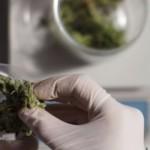 Como el cannabis ayuda a dormir