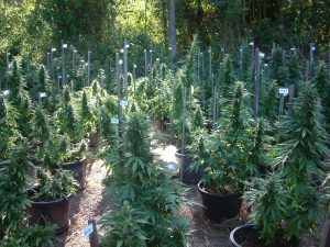 Cultivar en exterior