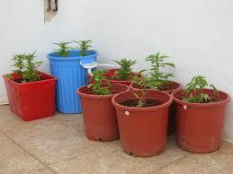 LLega la temporada del cultivo en exterior