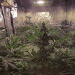 Como instalar focos para marihuana