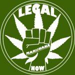 ¿Es legal el cultivo de cannabis en España?