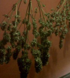 Secar marihuana en caja de hierro