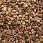 Cómo conservar las semillas de marihuana