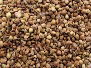 foto de semillas de cañamo