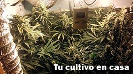 house plant cultivo en casa