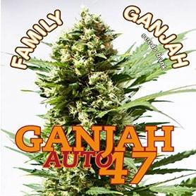 Promoción de regalos de Family Ganjah
