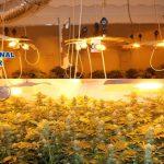 L'Espagne produit du Cannabis pour toute l'Europe