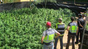 foto del cuerpo de policia con la plantacion