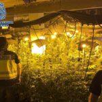 España produce cannabis para toda europa