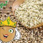 Bienfaits des graines de chanvre