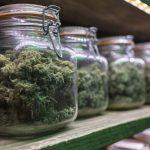 Verdaderos motivos de los cierres de los Clubes sociales de cannabis.