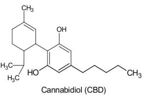 La oms no reconoce el cannabis como droga foto de composición cbd
