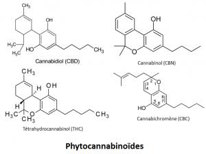 phytocannabinoïdes