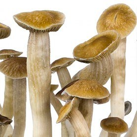 thai mushrooms