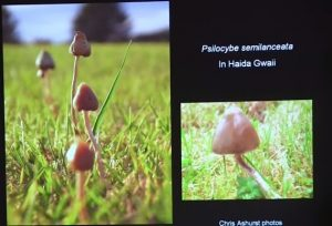 types of psychedelic mushrooms