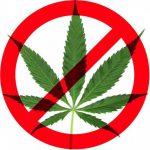 ¿Hacia un cambio en la regulación del cannabis?