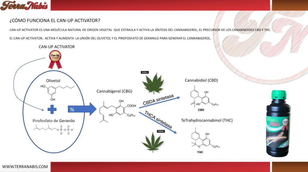 fertilizantes de terranabis gratis funcionamiento can-up activator