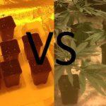 Cannabis Seeds VS Clones