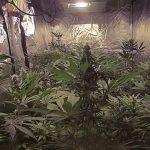 How to install marijuana grow lights