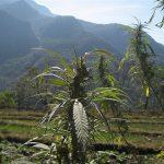 Guía de viajes para los amantes de la marihuana