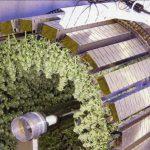 Growing Cannabis Seeds with the Gi Grow Wheel