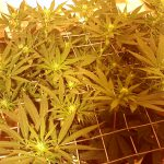 How to Get the Most out of your Grow Space