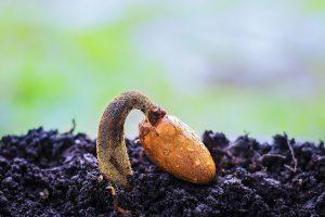 articulo sobre la salud y mantenimiento de la raiz