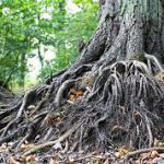 Roots: Parts, Growth and Care.