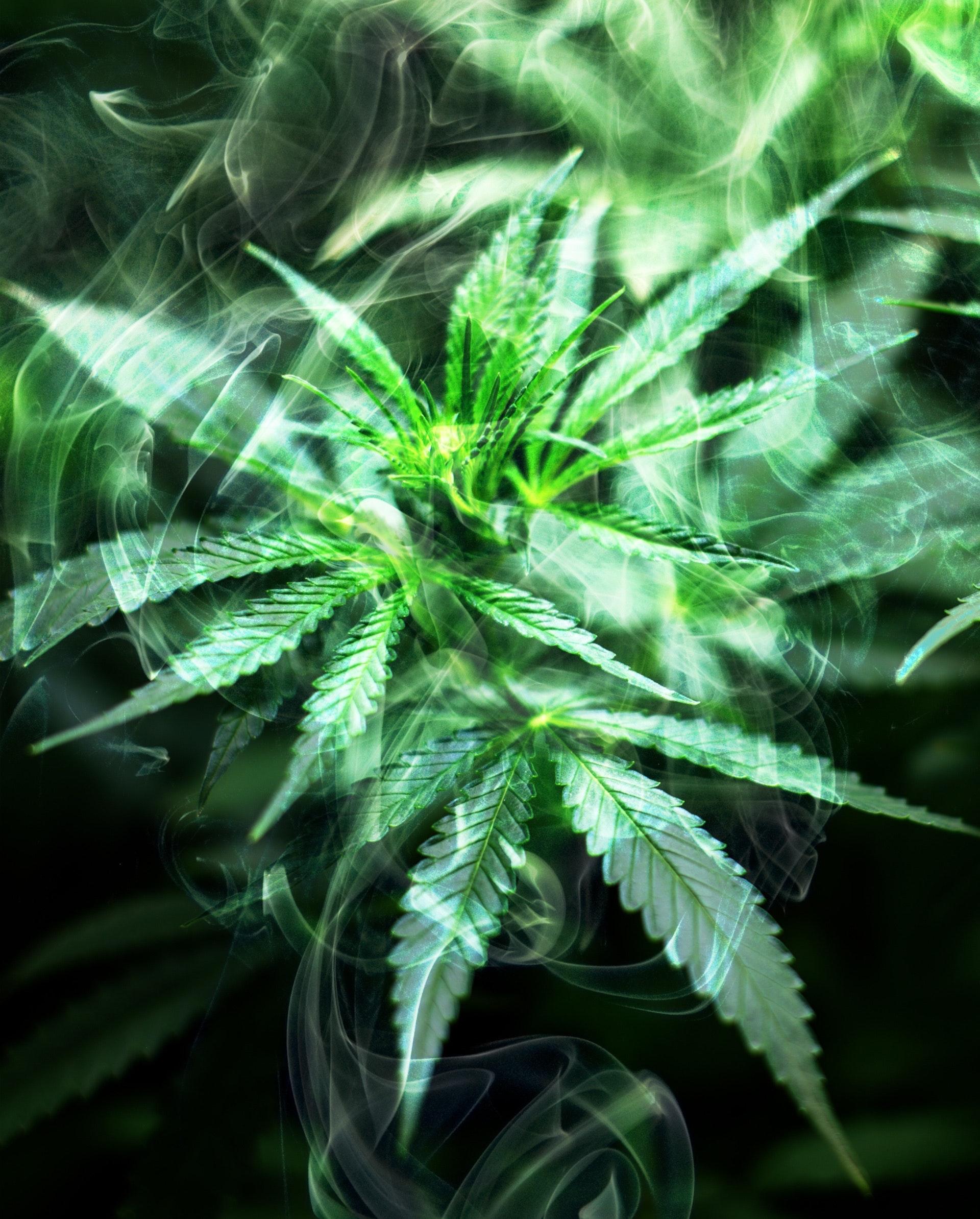Los efectos secundarios de la marihuana