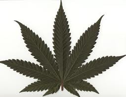 caracteristicas de la marihuana indica